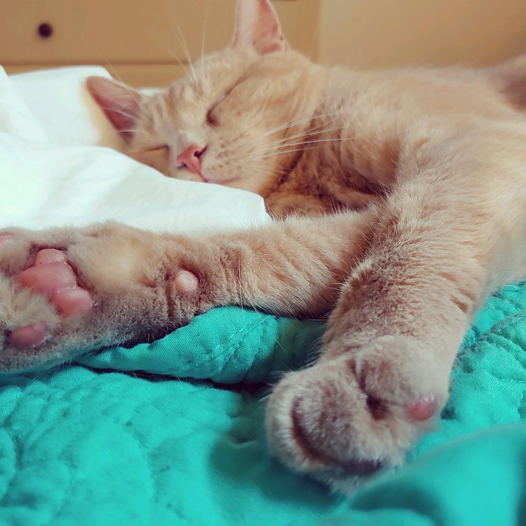 Mother of Cats 🐱 - karalee716 Salty Cat
