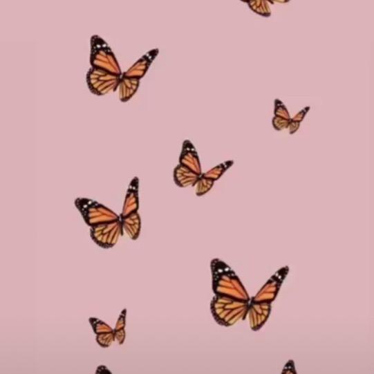 aesthetic backgrounds tiktok butterfly vsco wallpaper
