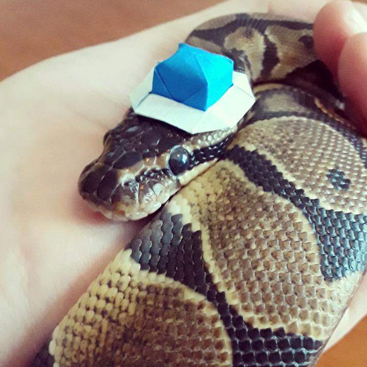 Waffle the Snake